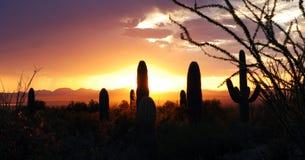 coucher du soleil de saguaro photos libres de droits