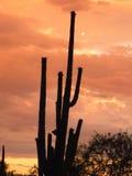 Coucher du soleil de Saguaro Images stock