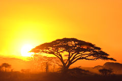 coucher du soleil de serengeti Photo stock
