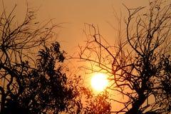 Coucher du soleil de silhouette au parc avec l'ombre tropicale d'arbres et le ciel orange photo stock