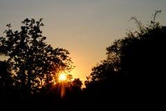 Coucher du soleil de silhouette avec le ciel d'or photographie stock