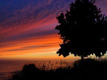 Coucher du soleil de silhouette d'arbre Image libre de droits