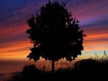 Coucher du soleil de silhouette d'arbre Photos stock