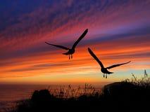 Coucher du soleil de silhouette d'oiseaux Photo libre de droits