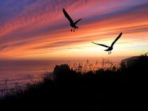 Coucher du soleil de silhouette d'oiseaux Photos libres de droits