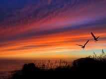 Coucher du soleil de silhouette d'oiseaux Image stock