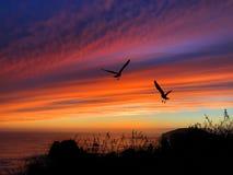 Coucher du soleil de silhouette d'oiseaux Images libres de droits
