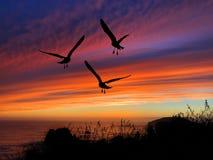 Coucher du soleil de silhouette d'oiseaux Image libre de droits