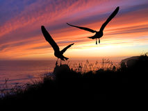 Coucher du soleil de silhouette d'oiseaux Photographie stock