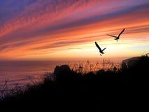 Coucher du soleil de silhouette d'oiseaux Images stock
