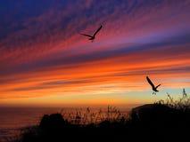 Coucher du soleil de silhouette d'oiseaux Photos stock