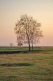 Coucher du soleil de silhouette de bouleau Images stock