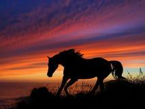 Coucher du soleil de silhouette de cheval Images stock