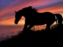 Coucher du soleil de silhouette de cheval Images libres de droits