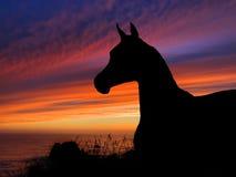 Coucher du soleil de silhouette de cheval Image libre de droits