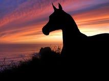 Coucher du soleil de silhouette de cheval Photo libre de droits