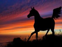 Coucher du soleil de silhouette de cheval Photo stock