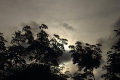 Coucher du soleil de silhouettes d'arbres Image libre de droits