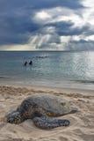 Coucher du soleil de tortue image libre de droits