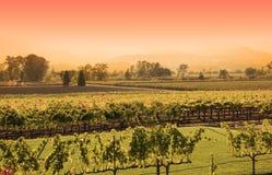 Coucher du soleil de vigne de Napa Photos stock