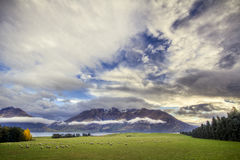 Coucher du soleil de zone de moutons de Queenstown Photographie stock