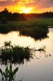Coucher du soleil de zone humide Image libre de droits