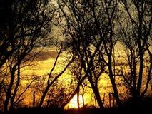 Coucher du soleil derrière des arbres Images libres de droits