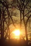 Coucher du soleil derrière des arbres Image libre de droits