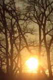 Coucher du soleil derrière des arbres Photographie stock libre de droits
