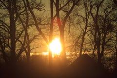 Coucher du soleil derrière des arbres Image stock