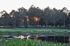 Coucher du soleil derrière des arbres Photo libre de droits