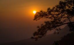 Coucher du soleil derrière l'arbre Image libre de droits