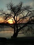 Coucher du soleil derrière l'arbre Photo libre de droits