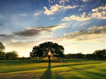 Coucher du soleil derrière l'arbre Photos stock