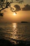 Coucher du soleil derrière l'arbre sur le paysage marin Photo stock