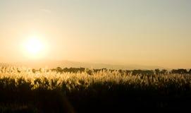 Coucher du soleil derrière le pré Images libres de droits