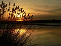 Coucher du soleil derrière le roseau Photos libres de droits