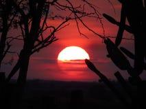 Coucher du soleil derrière les arbres Image stock