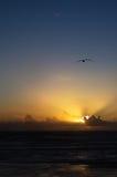 Mouette d'or de coucher du soleil image stock