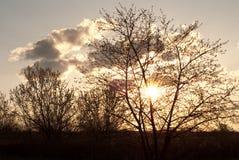 Coucher du soleil derrière un arbre Images stock