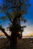 Coucher du soleil derrière un arbre Images libres de droits