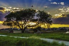 Coucher du soleil derrière un arbre Image stock