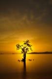 Coucher du soleil derrière un arbre Photos libres de droits