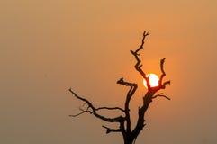 Coucher du soleil derrière un arbre Photo libre de droits