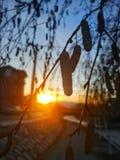 Coucher du soleil derrière un arbre Photographie stock