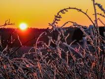 Coucher du soleil derrière un buisson Photo stock