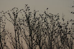 Coucher du soleil des oiseaux dans un arbre Photo stock