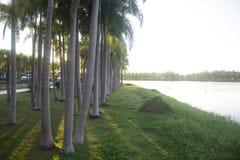 Coucher du soleil des palmiers et du marais, Thaïlande images libres de droits
