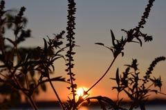 Coucher du soleil doux au-dessus du lac Image libre de droits