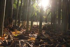 Coucher du soleil en bambou Photographie stock libre de droits